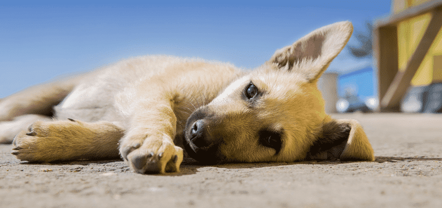 How I Make Over $2000 Per Year On DogVacay and Rover