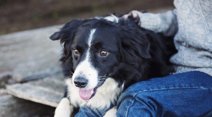 Rover dog