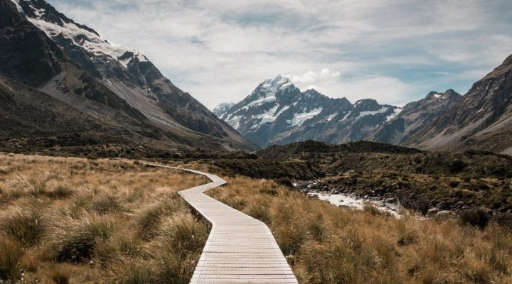 Lawyers, Doctors, and the Appeal of the Clear Career Path